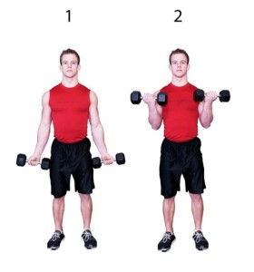 Dumbbell-Biceps-Curl